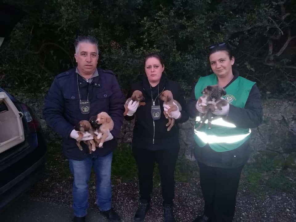 Ladispoli, 7 cuccioli recuperati dalle Guardie Zoofile Nogra