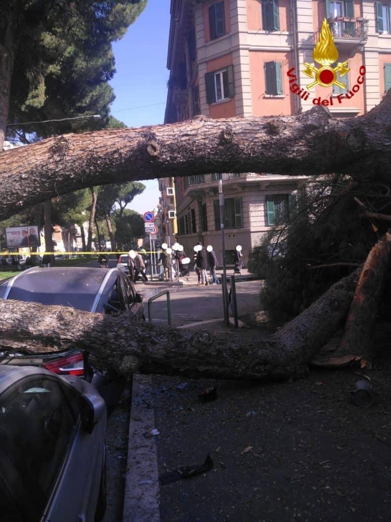 Albero si abbatte su due auto: intervento dei vigili del fuoco