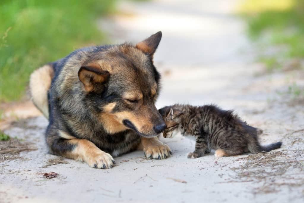 Allumiere, un'interrogazione sulle condizioni degli animali
