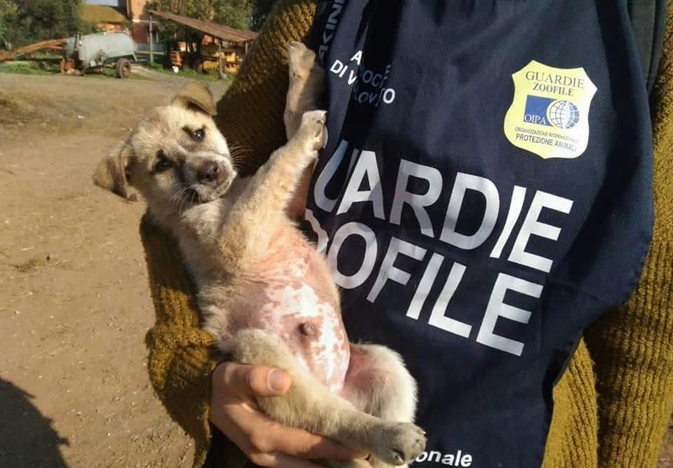 Randagismo, nove cuccioli in cerca di una casa