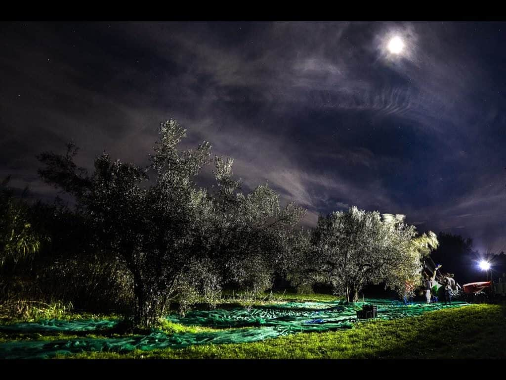 """Tuscia: La storia del recupero di oliveti abbandonati dà vita a un Olio """"...diNotte"""""""
