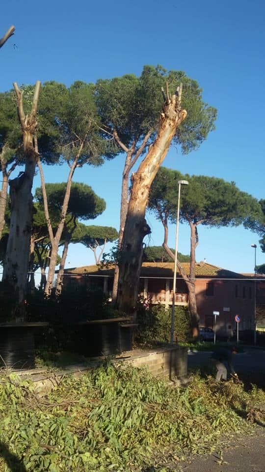 Albero pericolante, domani chiusa via Forcelletta a Fiumicino