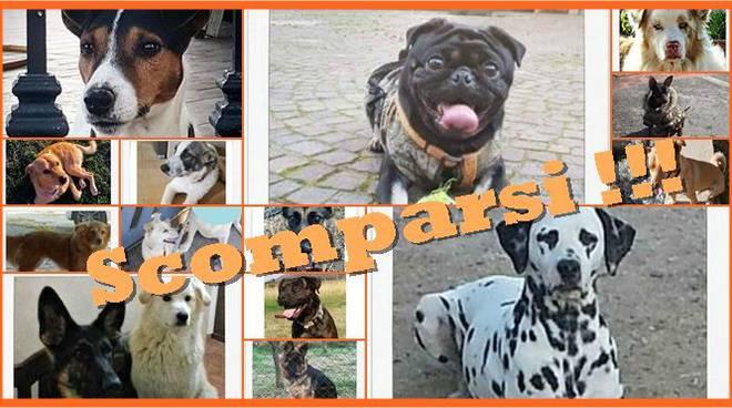 Civitavecchia, cani scomparsi nel nulla: la rabbia dei cittadini