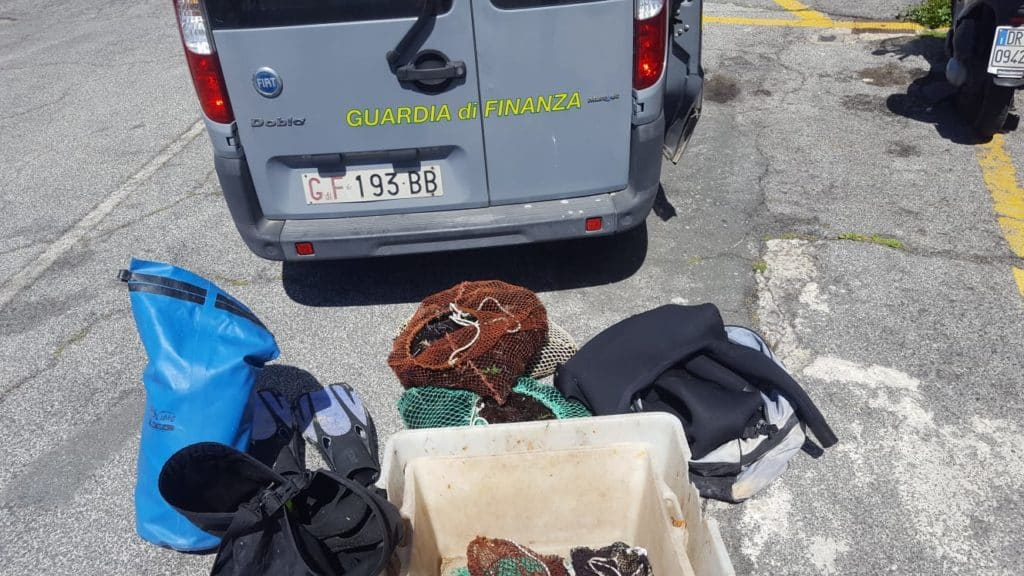 Sequestrati oltre 600 ricci di mare