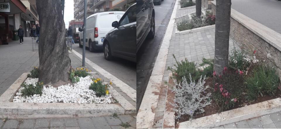 Ladispoli, a viale Italia sbocciano le aiuole