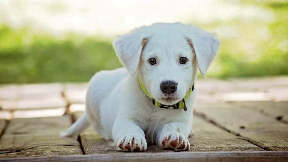 Ladispoli, 400 euro per chi adotta un cane