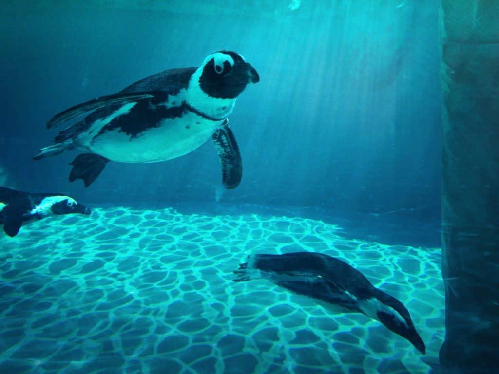 Giornata Mondiale degli Oceani, presente anche Zoomarine