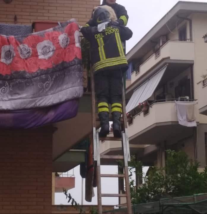 Incendio via Ruspoli, salvato cagnolino grazie ai VVF