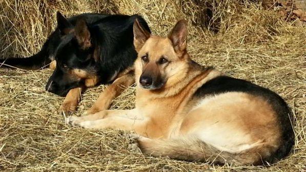 Bracciano, nasce la prima casa di riposo per cani orfani