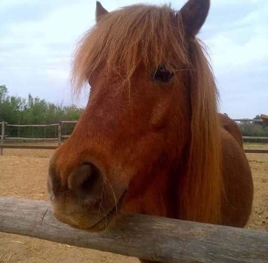 Ladispoli, rubati cinque cavalli al maneggio di Via delle Quote