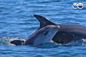 Delfini avvistati a largo della costa tra Ostia, Fiumicino e Torvaianica