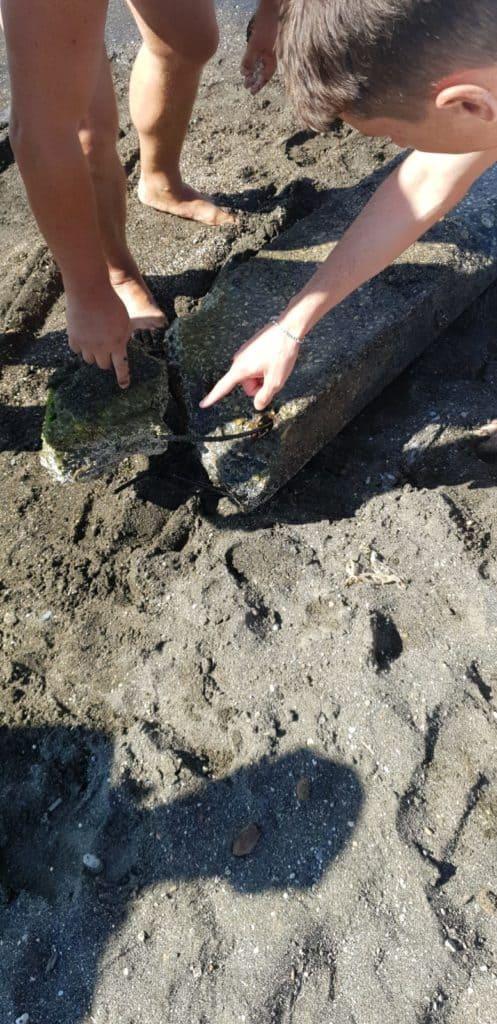 Spuntoni in acqua, continuano i ritrovamenti di nuovi blocchi di cemento