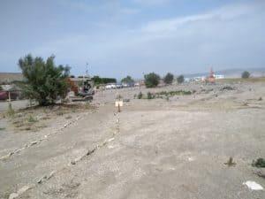 Campo di Mare, cinque alberi di tamerice all'ingresso della Palude di Torre Flavia