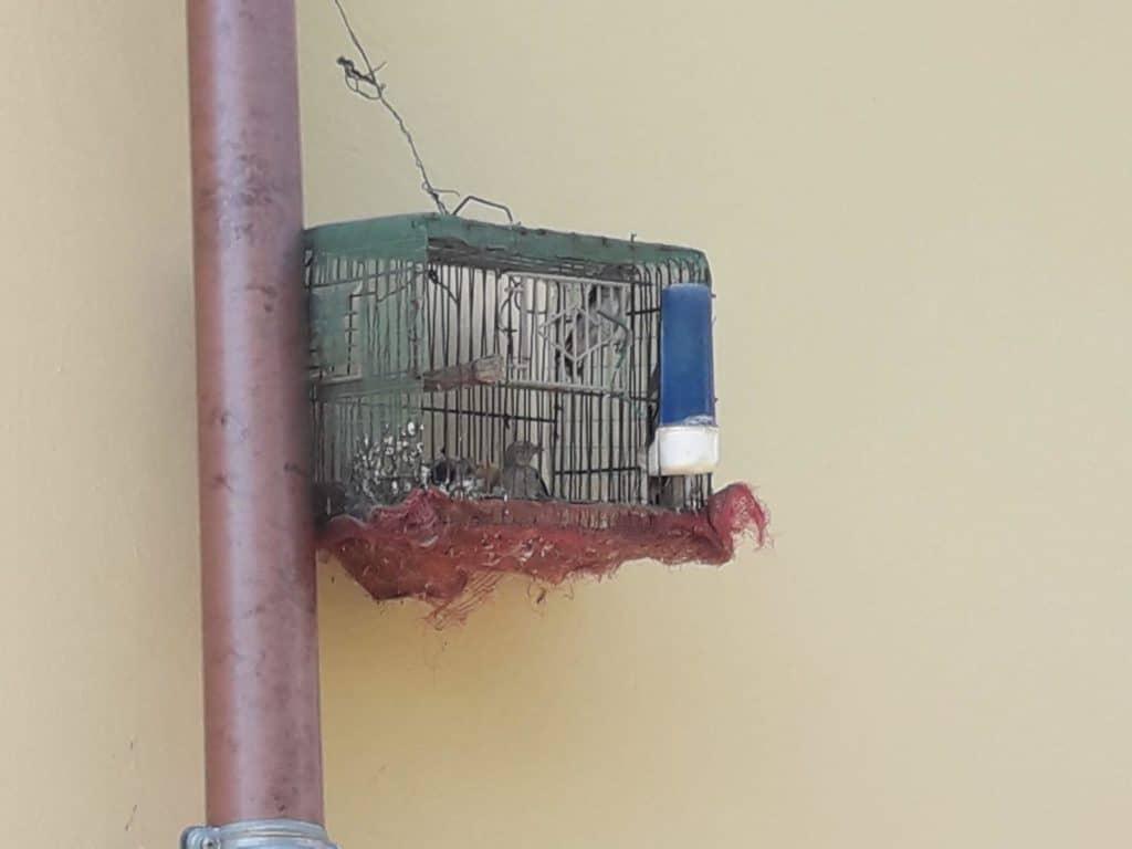 Detenzione di avifauna protetta
