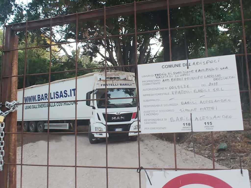 """Taglio di alberi danneggiati al Parco di Palo, il PD: """"L'amministrazione vigili"""""""