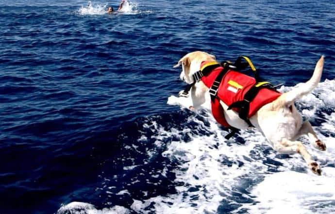 Ostia, cani bagnino salvano un adulto e due ragazzi