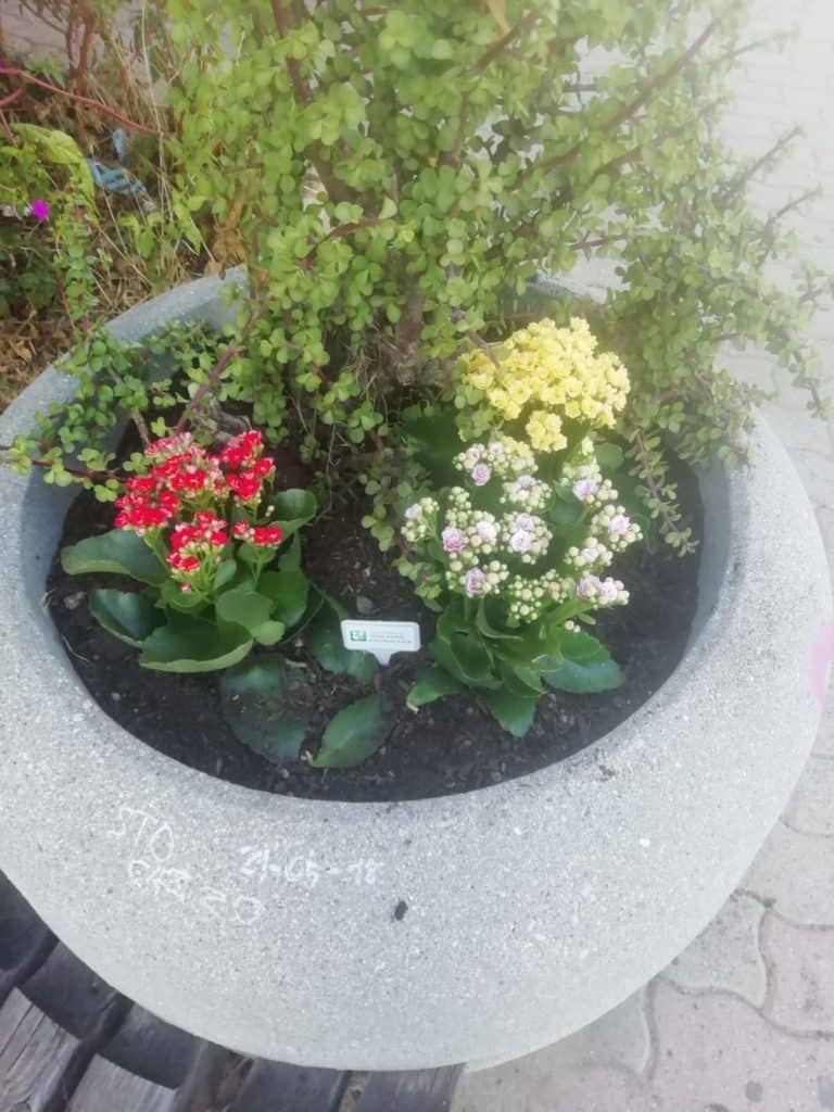 Civitavecchia, Fare Verde dona fiori e piante per adornare via Palmiro Togliatti.