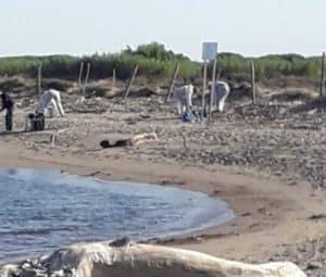 Fiumicino, al via la pulizia straordinaria sulla spiaggia di Coccia di Morto