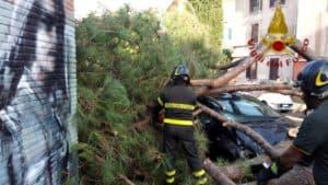 Pino cade e distrugge tre auto. Paura in strada questa mattina