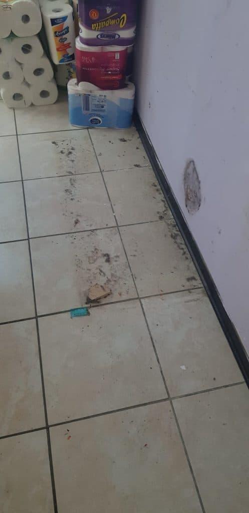 Cerveteri, topi a scuola: chiuso il plesso di Borgo San Martino