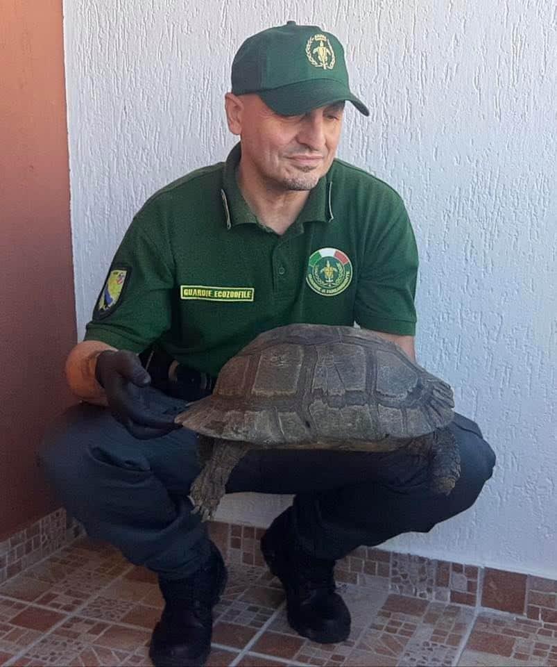 Cerveteri, soccorsa tartaruga sul territorio comunale