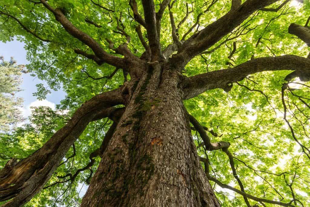 alberi chirieletti settevene palo