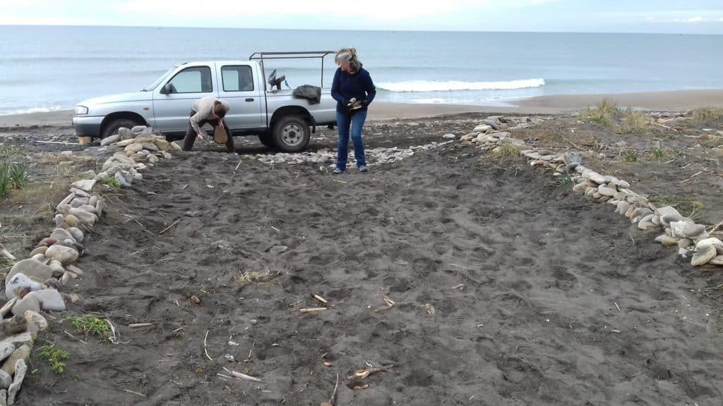 Torre Flavia, prosegue la costruzione dei muretti e la bonifica della spiaggia