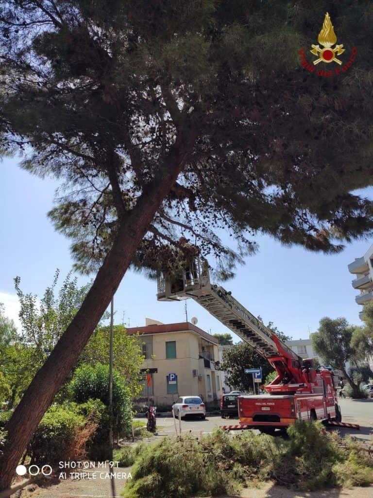 Civitavecchia, pino di 10 metri a rischio caduta: intervengono i vigili del fuoco