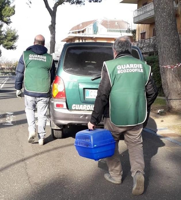 Ladispoli: i volontari di Fareambiente mettono in salvo tre scoiattoliLadispoli: i volontari di Fareambiente mettono in salvo tre scoiattoli