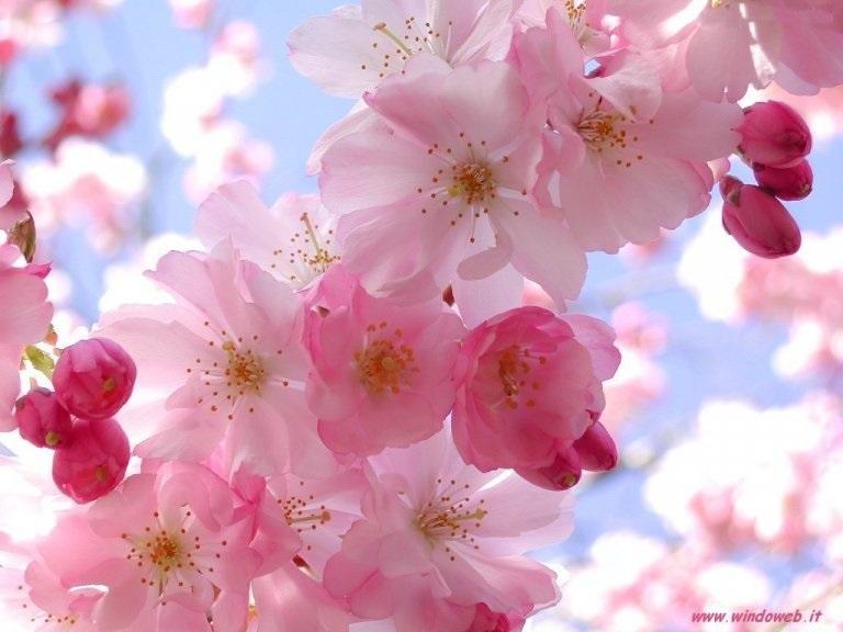 E' primavera: oggi l'equinozio che ci fa salutare l'inverno