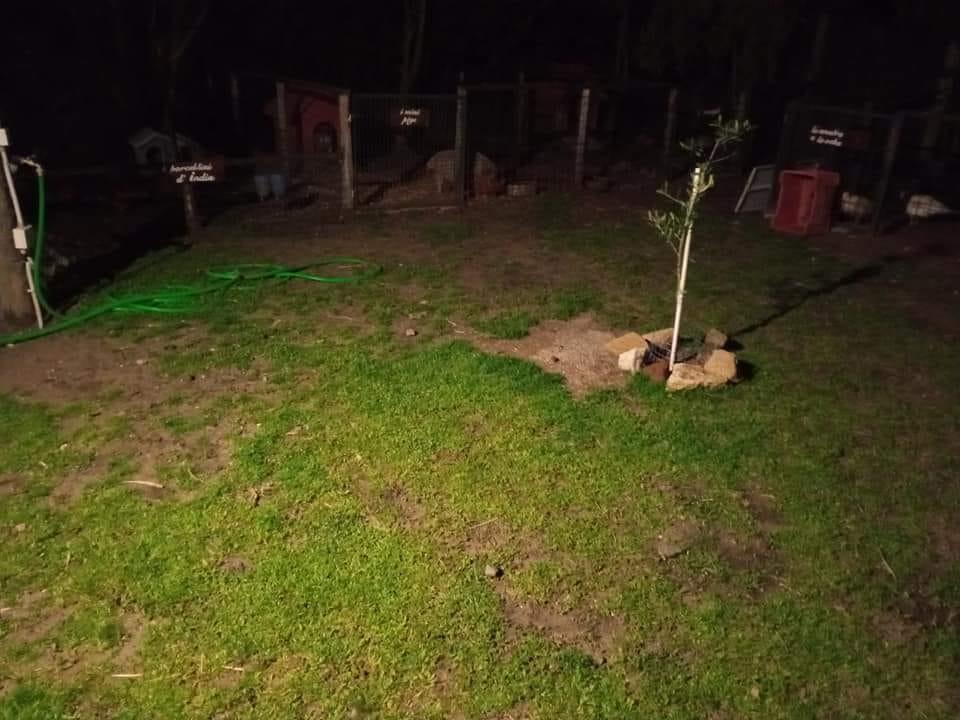 Fiumicino: uccisi gli animali dell'ex direttore dell'oasi Wwf di Macchiagrande