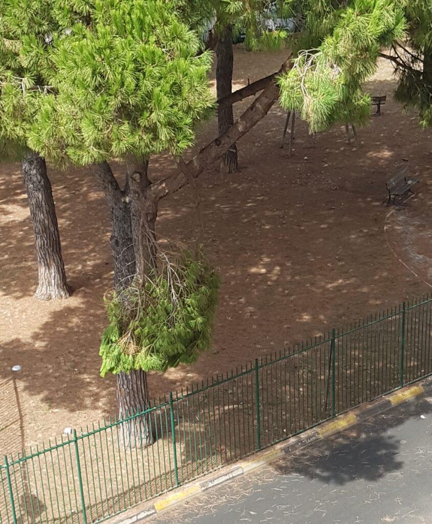 Ladispoli, chiusa Piazza Matteotti per il rischio di caduta rami